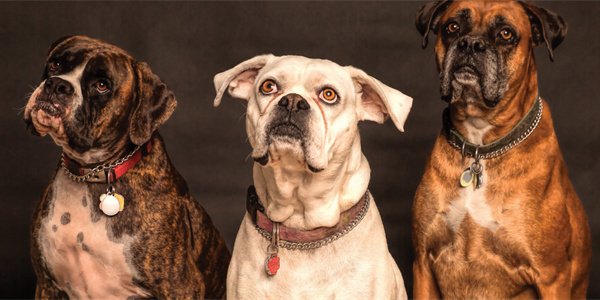 Adorable Photo of Dogs Attending a Stratford Performance Takes Off Online
